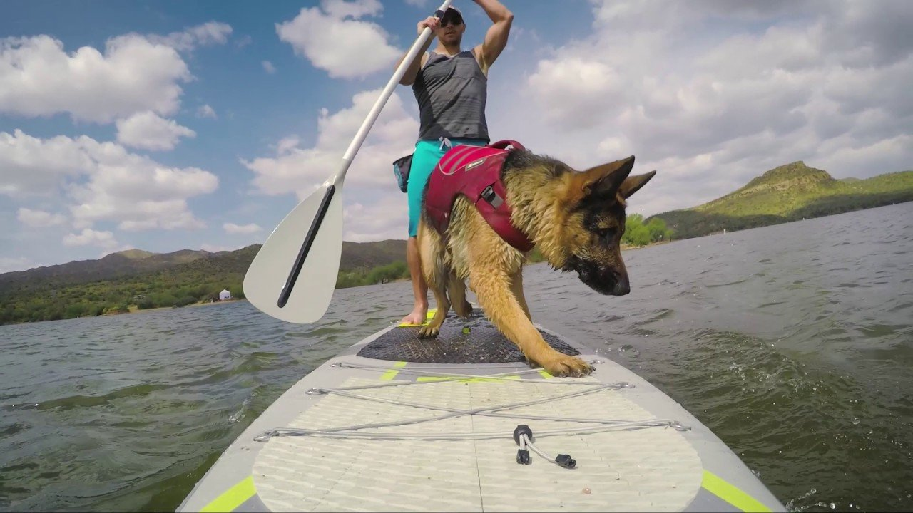 Taking dog for paddleboarding