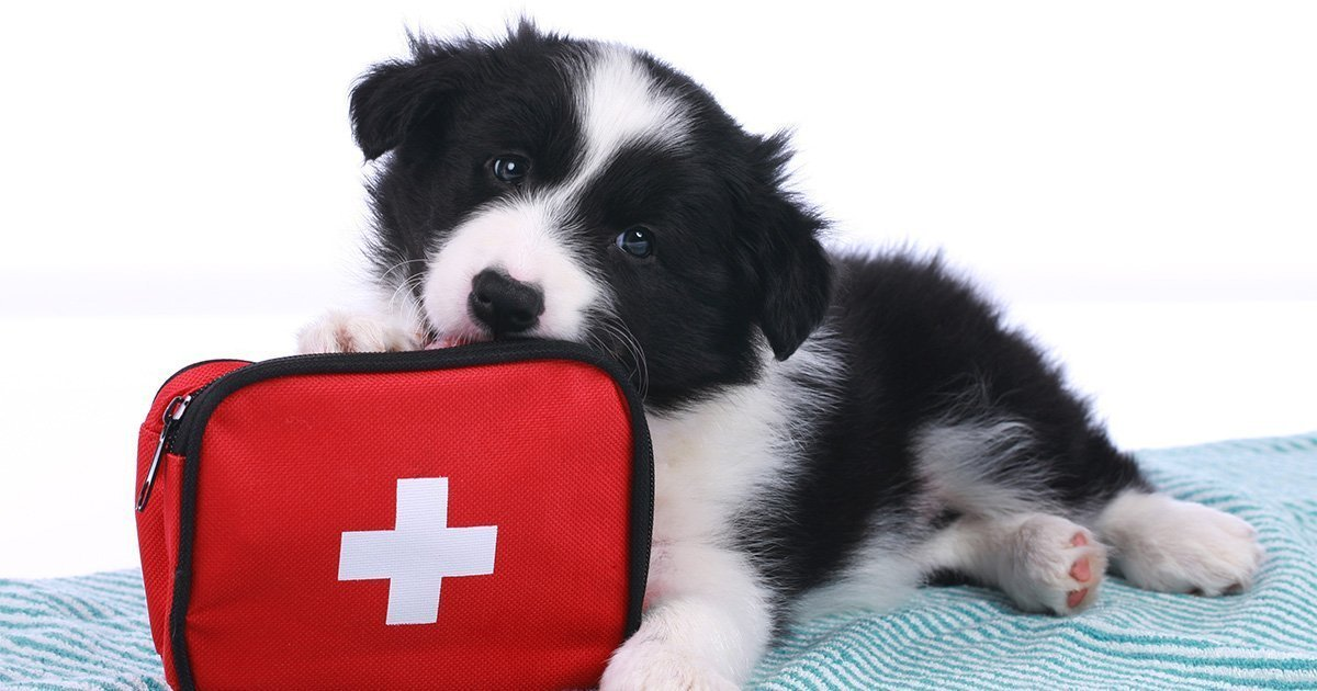 first aid for dog SUP training