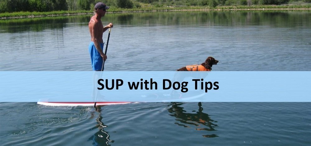SUP tips with dog