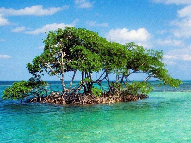 Mangrove Island Florida Fishing Spot