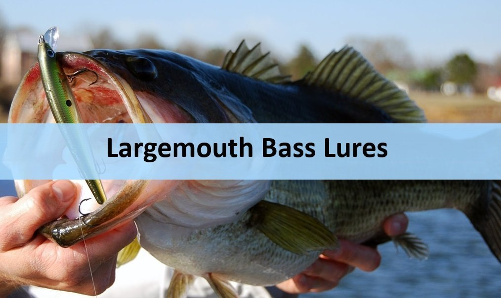 5 Must-Have Lures for Largemouth Bass Fishing